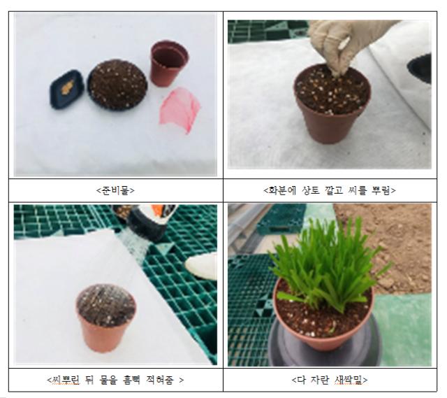 새싹채소재배과정.png